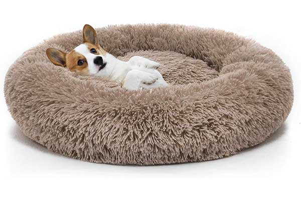 6. MIXJOY Orthopedic Dog Bed Comfortable Donut Cuddler