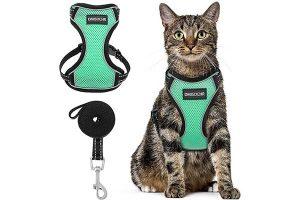 Best Cat Harnesses Reviews